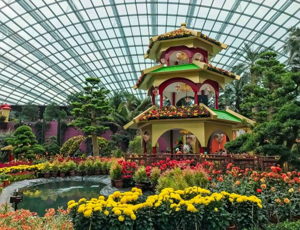 Usher in the Rooster Year with Dahlia Dreams at Gardens by the Bay