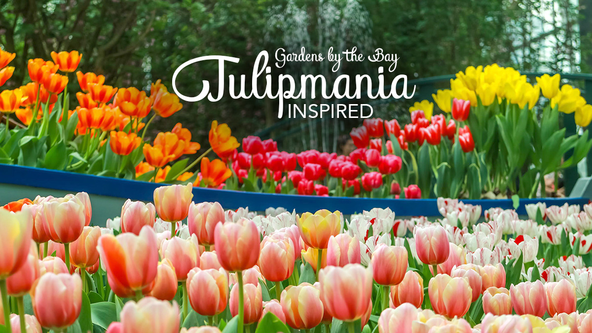 Incroyable Tulipmania Returns At Gardens By The Bay With Van Goghu0027s Art Pieces    Darren Bloggie 達人的部落格