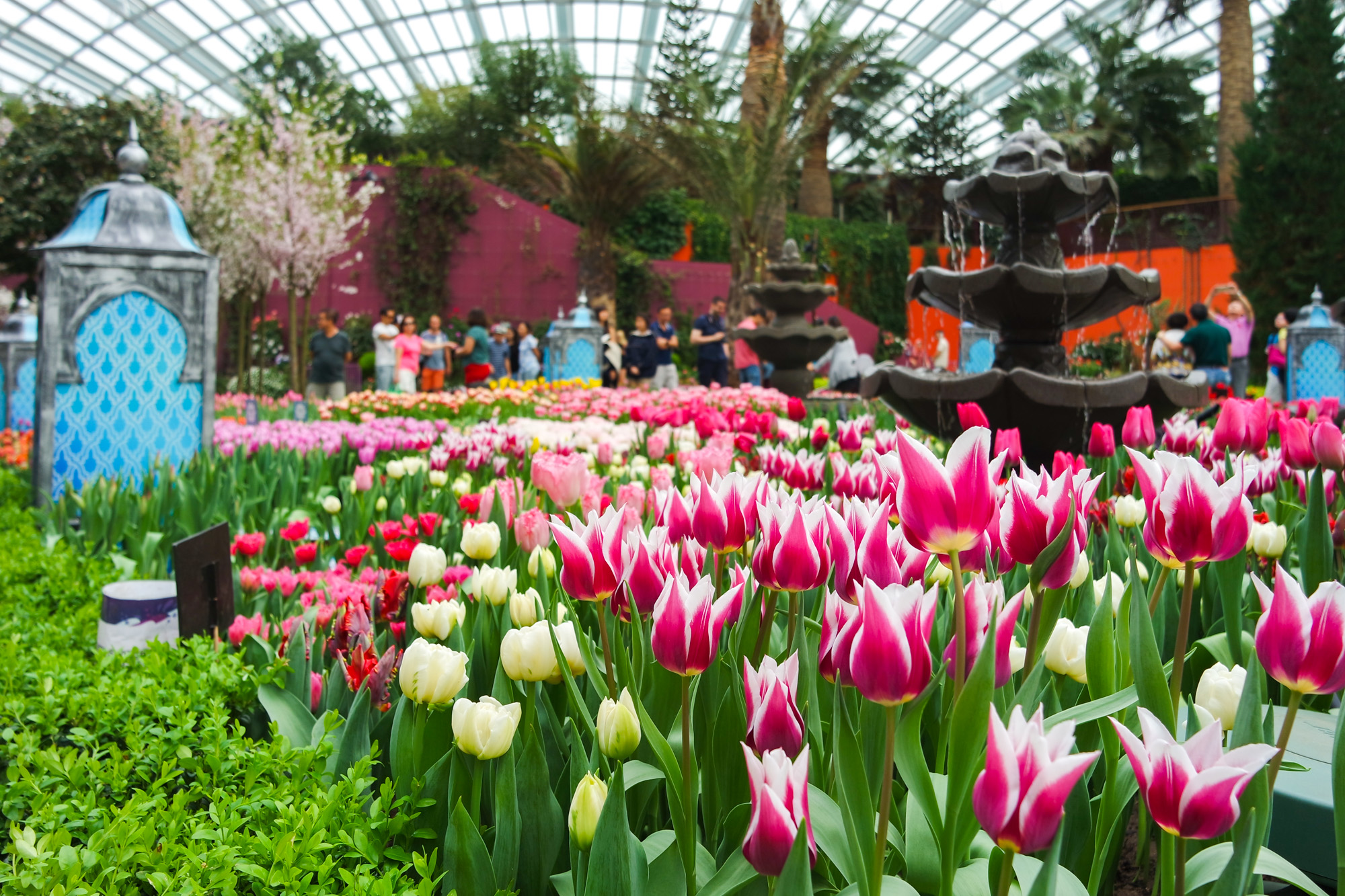 Tulipmania Rediscovered at Gardens by the Bay