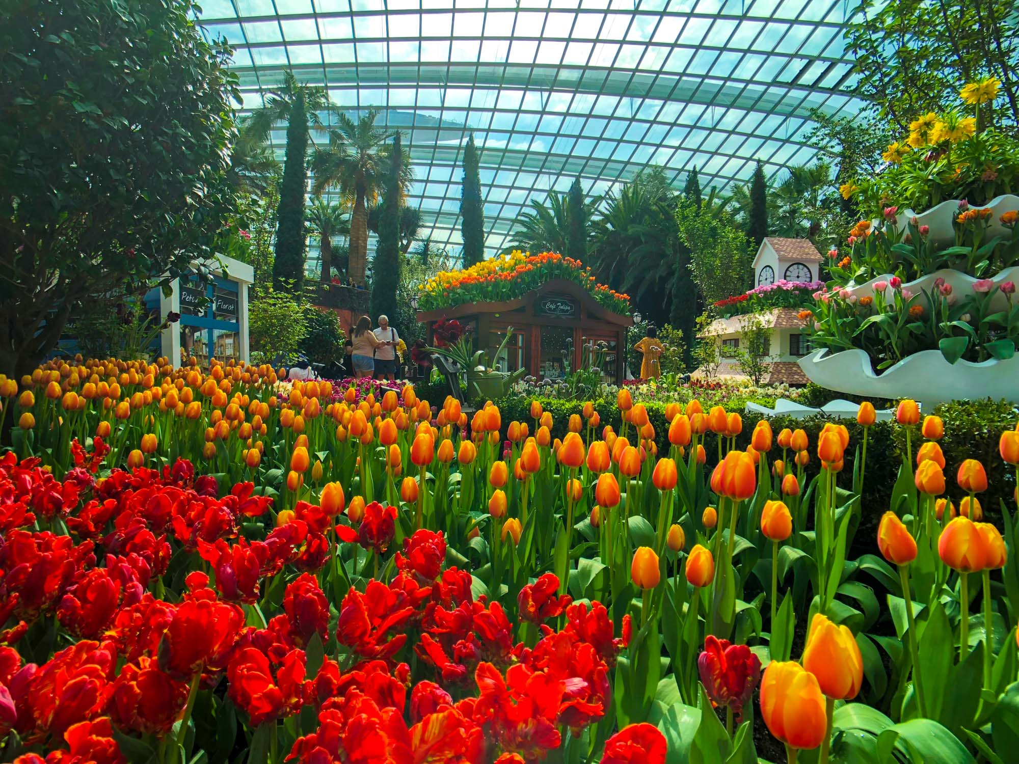 Tulipmania at Gardens by the Bay