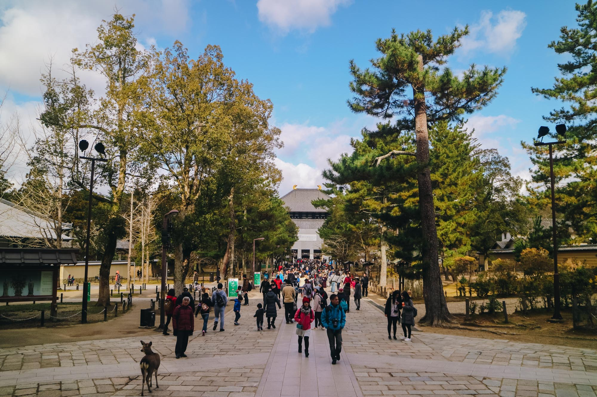 Nara-Park-奈良公園-kyoto-japan-darrenbloggie