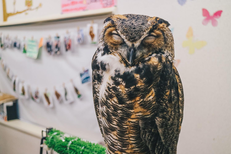 owl-cafe-shinjuku-tokyo-japan-darrenbloggie