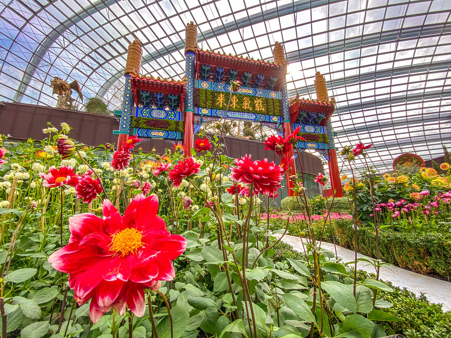 Dahlia Dreams 2020 at Gardens by the Bay