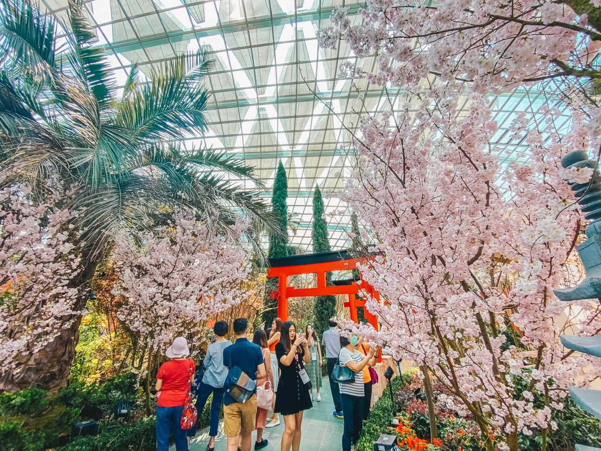 Sakura Matsuri at Gardens by the Bay 2020
